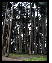 i5 trees